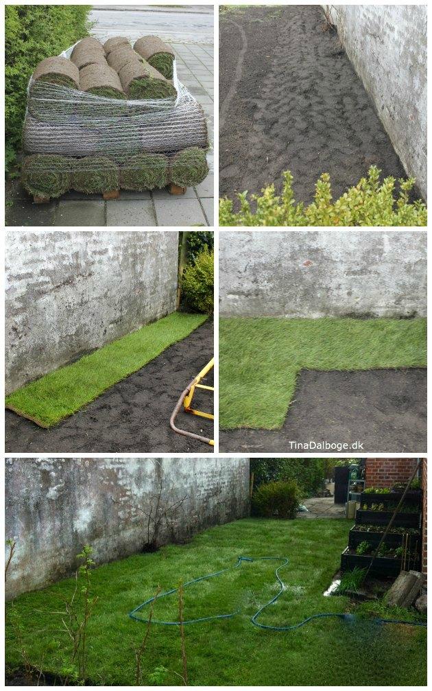 sådan lagde vi rullegræs i haven