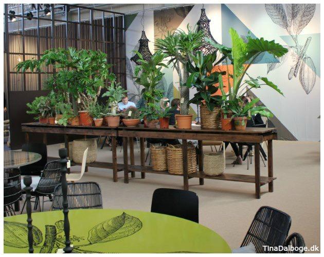 Inspiration med forskellige planter fra formland 2016