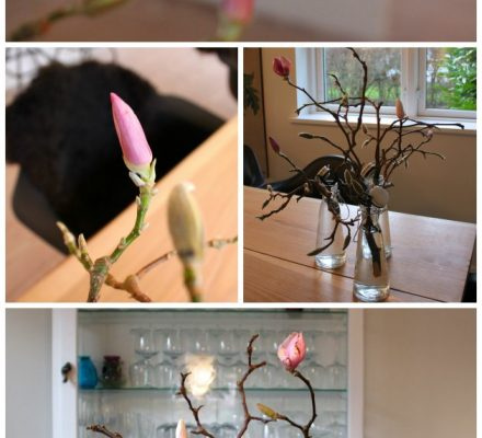 Magnolia i knop - tulipantræ