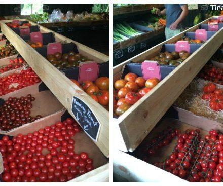 danske tomater i forskellige sorter