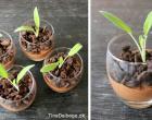 dessert-med-chokolade-mousse-der-ligner-en-potteplante-featured-image