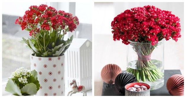 holdbare-blomster-fra-queen-flowers