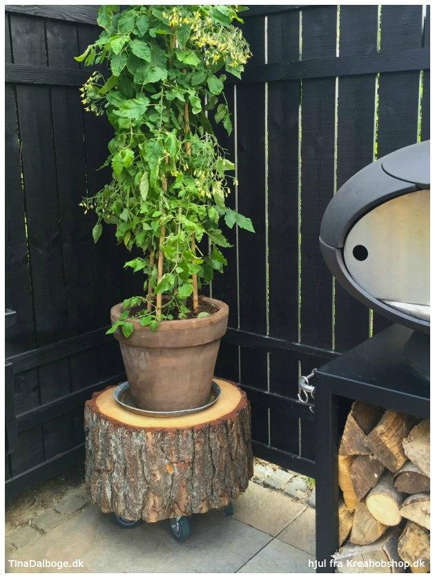 hvordan skal en træstub tørre og bruges til podie til planter tinadalboge