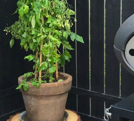hvordan-skal-en-traestub-torre-og-bruges-til-podie-til-planter-tinadalboge-featured-image