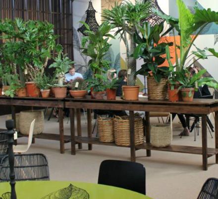 inspiration-med-forskellige-planter-fra-formland-2016-featured-image