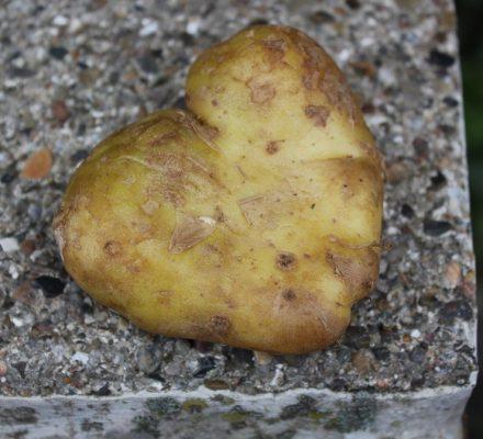 hjerteformet kartoffel