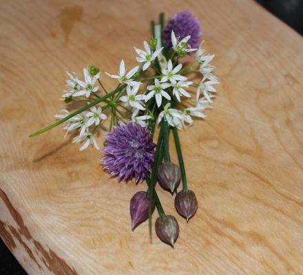 blomster-skovløg--og-purløg
