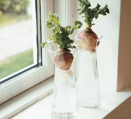 majroer i hyacintglas