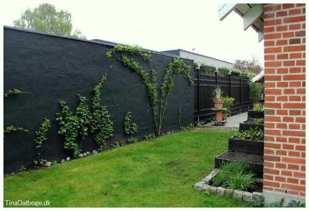 mur med alger der er malet med murmaling tinadalboge