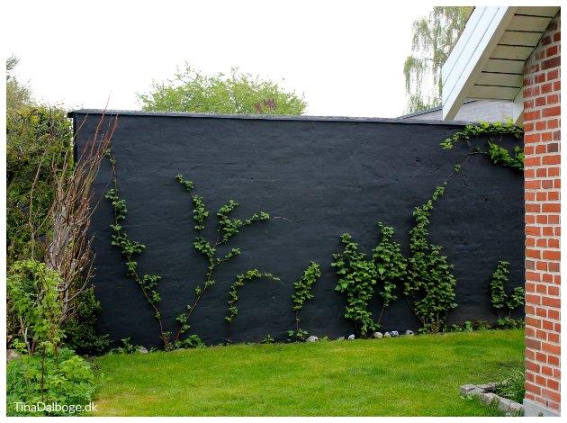 mur udenfor i haven malet sort med murmaling tinadalboge