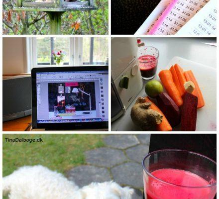 sommerhushygge, saftpresser, regnskab og korrektur af e-bog