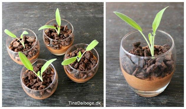 opskrift på chokolademousse