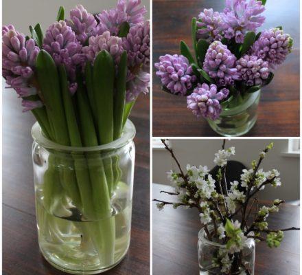 hyacinter og grene i gamle sylteglas
