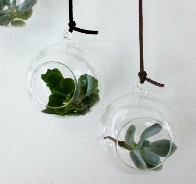 glaskugler med planter i til små ophæng på en gren