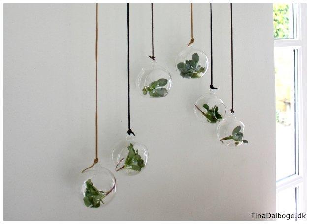 glasophæng med sukkulenter og små planter i