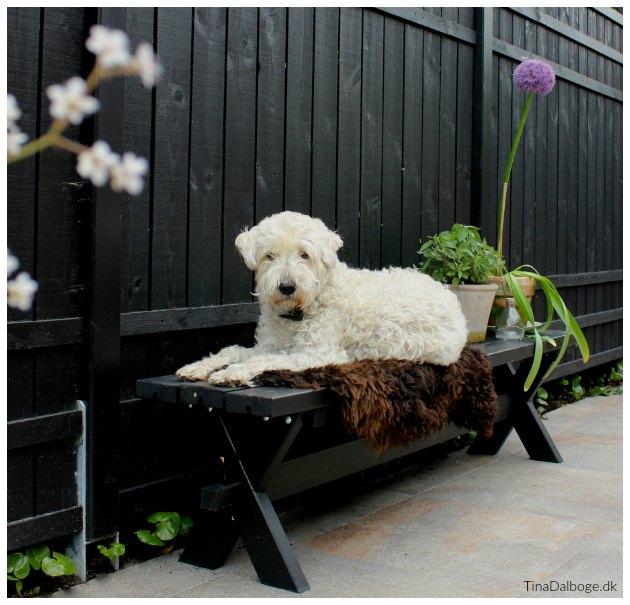 terrasse med bænk Hund der ikke fælder tinadalboge