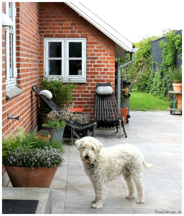 terrasse med italienske fliser og hornbæk stole og en scwt hund tinadalboge